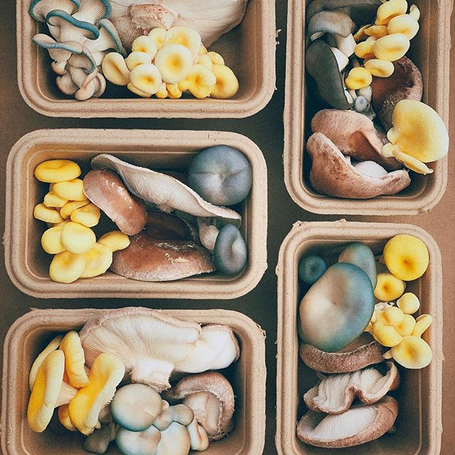 @margarets_mushrooms added some magic to large boxes this week.  #supportlocal #fruitandveg #supportlocalfarmers #community #parkigrocer