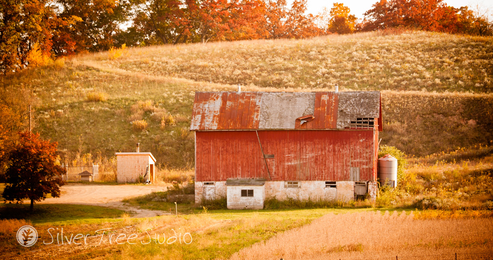 Silver Tree Studio, Photographer, Mount Horeb, WI