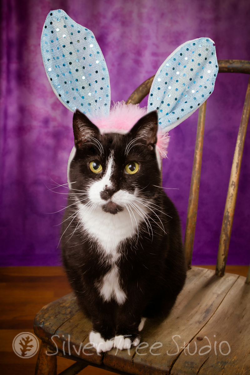 Quack The Cat - Easter Bunny 2014