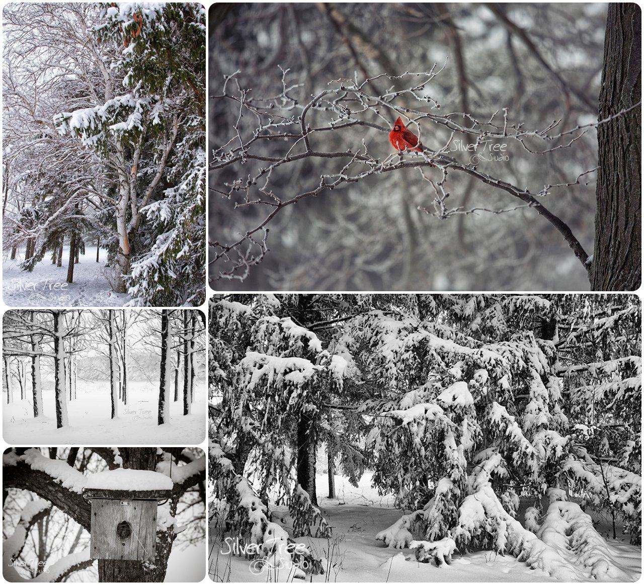 SilverTreeStudio-Snow