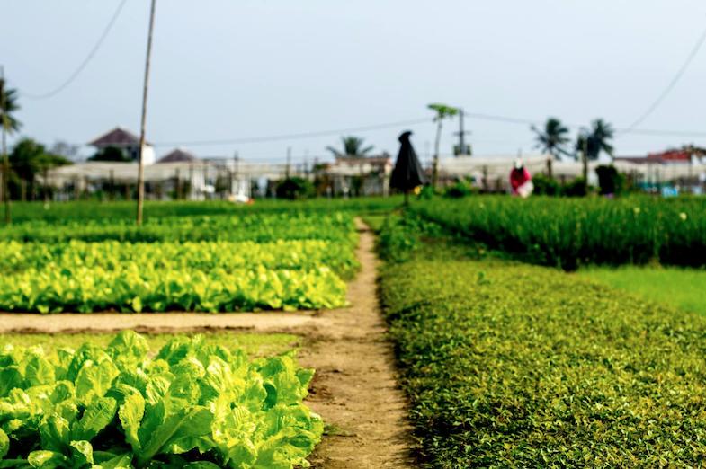 Organic-Yoga-Healthy-Food-Tra-Que-Farm.png