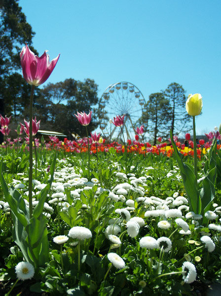 Floriade, held every September, (Spring) in Commonwealth Park on the foreshores of Lake Burley-Griifin.