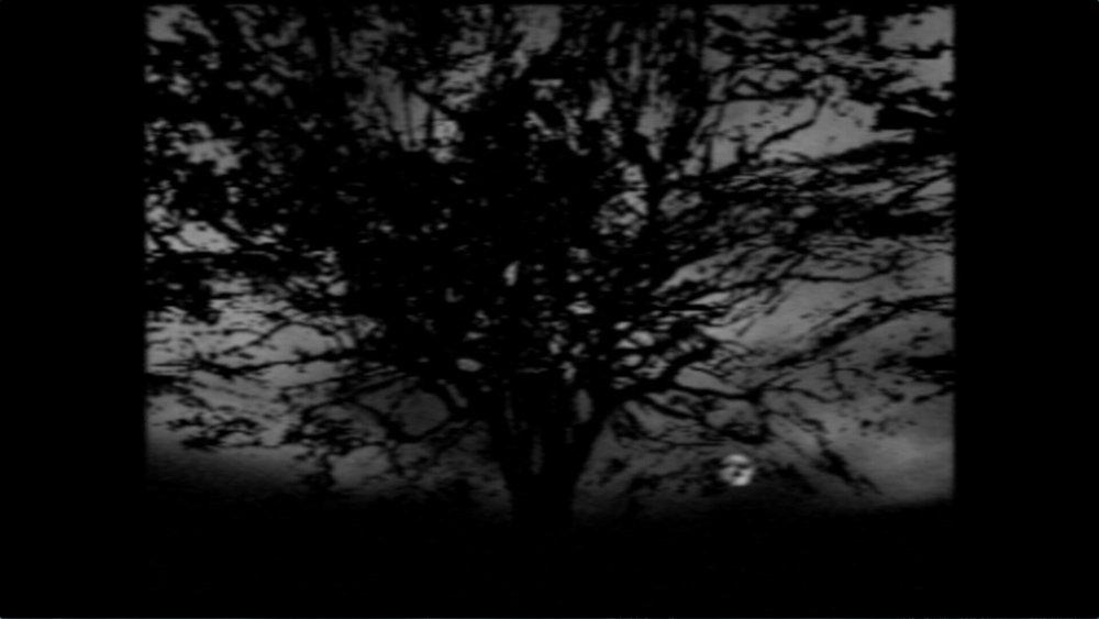 09-Tree-of-Life.jpg