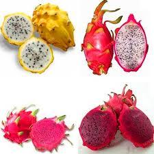 fruit du dragon.jpg