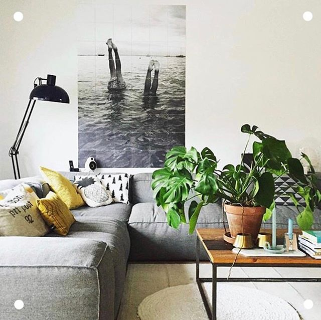 You know we LOVE the use of indoor plants to bring a space to life! Let us get your space inspection ready and watch those offers roll in.  Photo via @sabrinavisual . . . . . #styledtosell #propertystyling #propertystaging #realestate #livingroom #interiorsecrets #indoorplants #plantsmakepeoplehappy #pocketofmyhome #showmeyourstyled #homestylist #openhouse #bendigosmallbusiness #bendigo