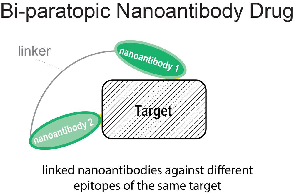 Bi-paratopic Drug-01.png