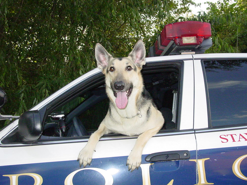 K-9 Shadow picture[1333].jpg