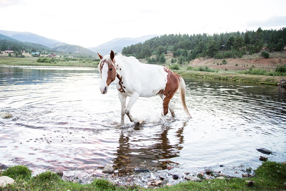 This shoot consisted of some more artistic horse photos, getting a horse in water, plus getting photos for my horse calendar. Talk about one stone, allll the birds!