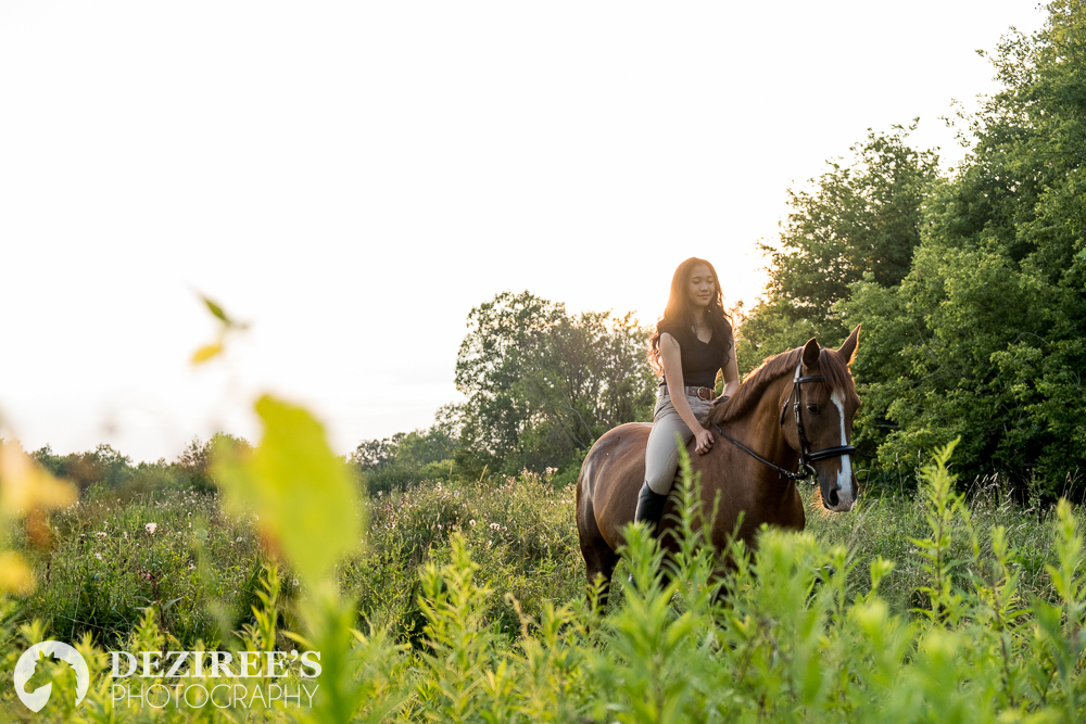 Where to have your Michigan equestrian photo shoot
