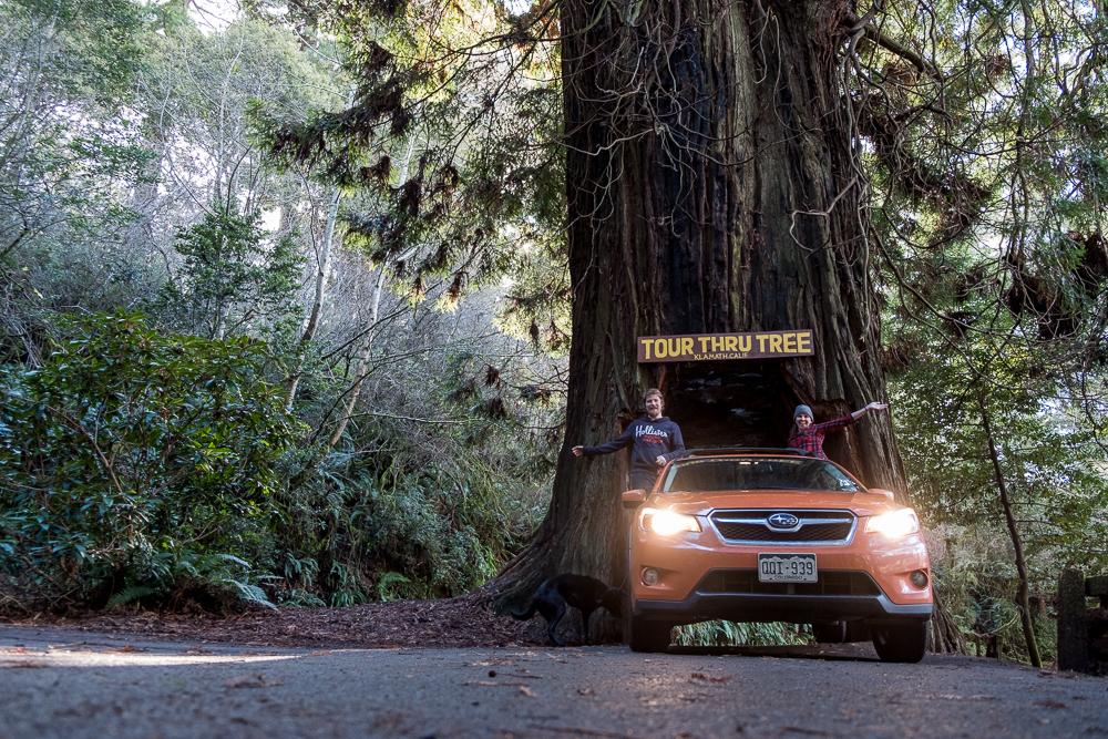 2-1-Redwoods-4.jpg