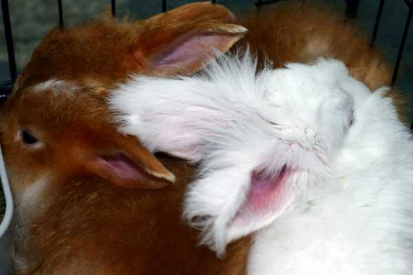 bunnies-ears.jpg