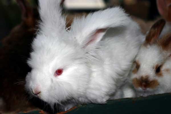 white-bunny_4338.jpg