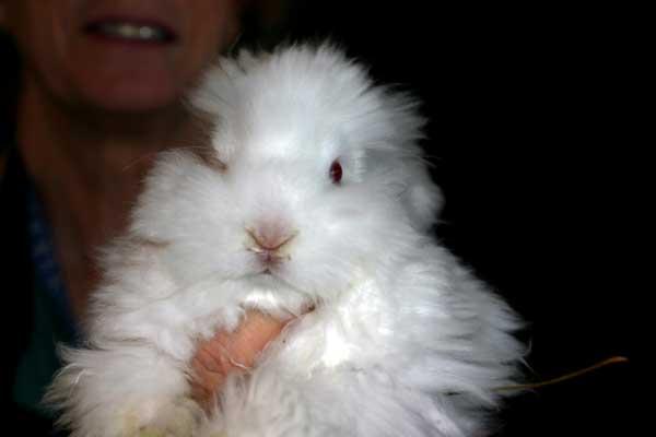 baby-bunny-4335.jpg