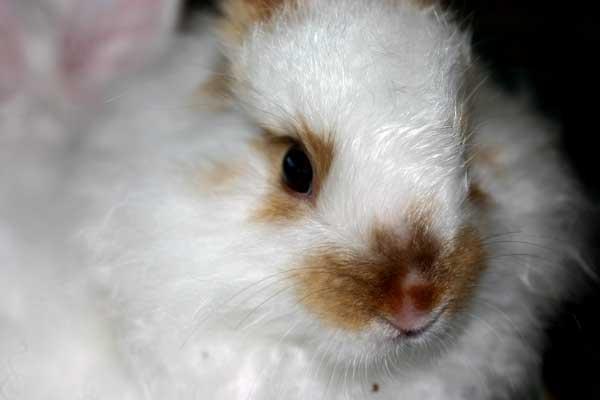 bunny-face.jpg