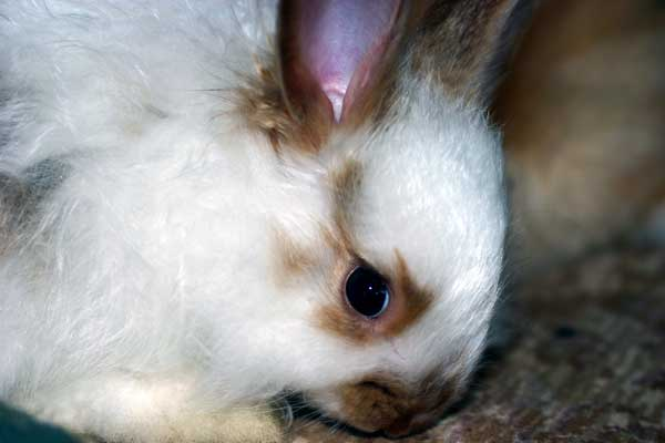 sweet-bunny-face.jpg