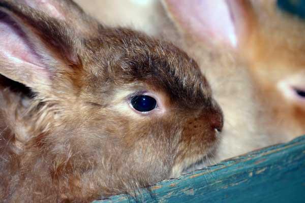 brown-bunny-4329.jpg