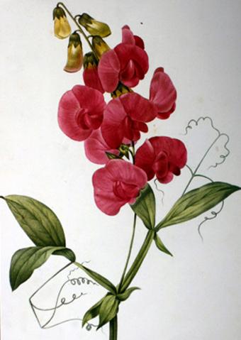 sweet-pea-valentine-card2.jpg