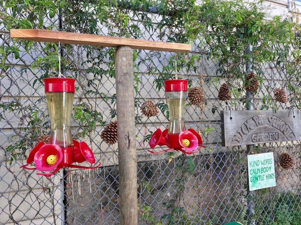 hummingbird feeders.jpg