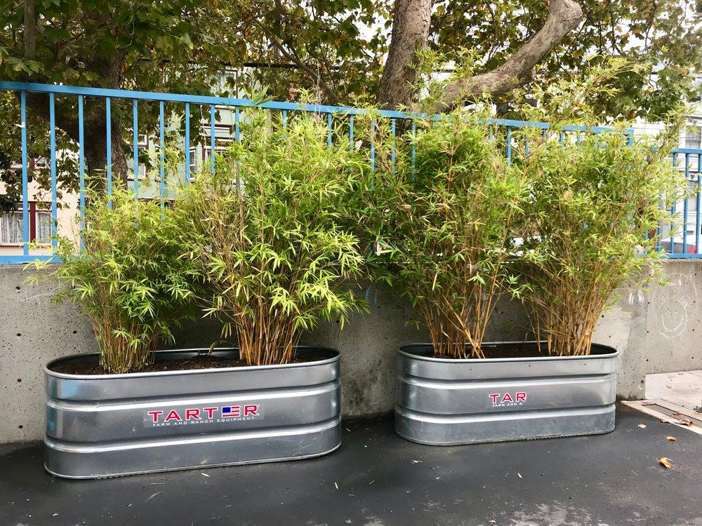 bamboo lower yard.jpg