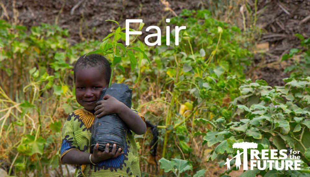 fair1.jpg