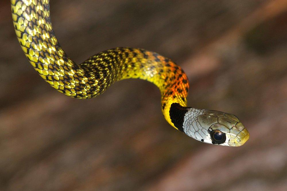 Sankey Snake