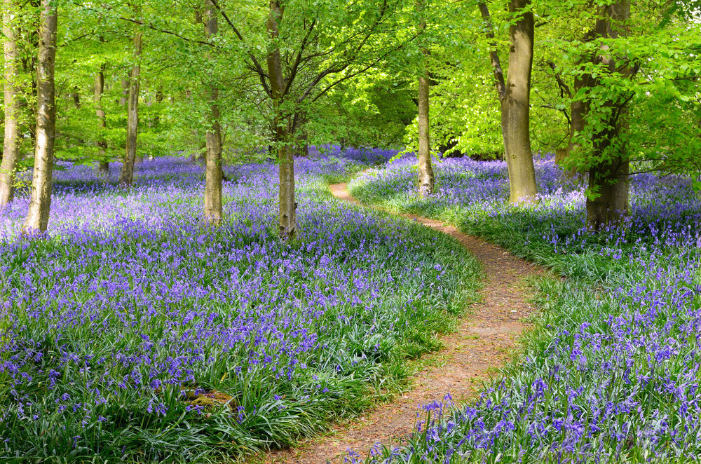 Green Spaces Steering Group - Our Mission: To maintain and enhance Green Spaces within Grayshott to provide a welcoming, safe and pleasing environment that encourages play recreation, wellbeing and inspiration for current and future generations…
