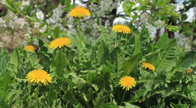 more weeds -