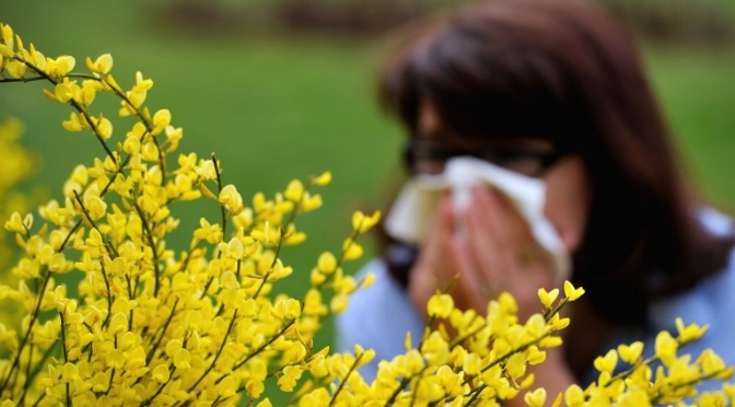more pollen and allergies -
