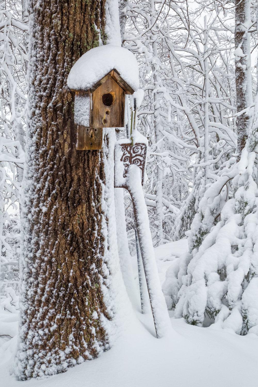 Will_Nourse_Winter Peace.jpg