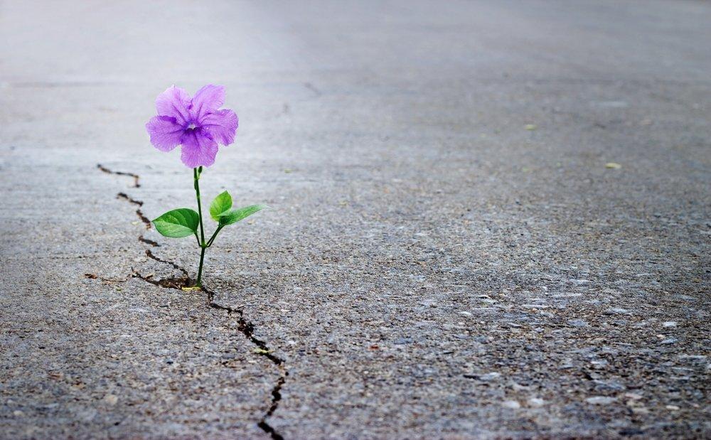 Rebuilding After Divorce -