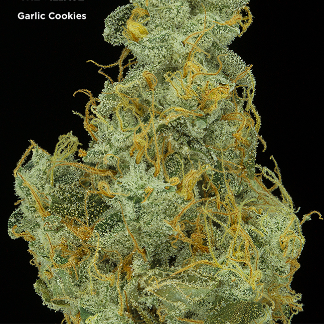 Garlic Cookies aka GMO