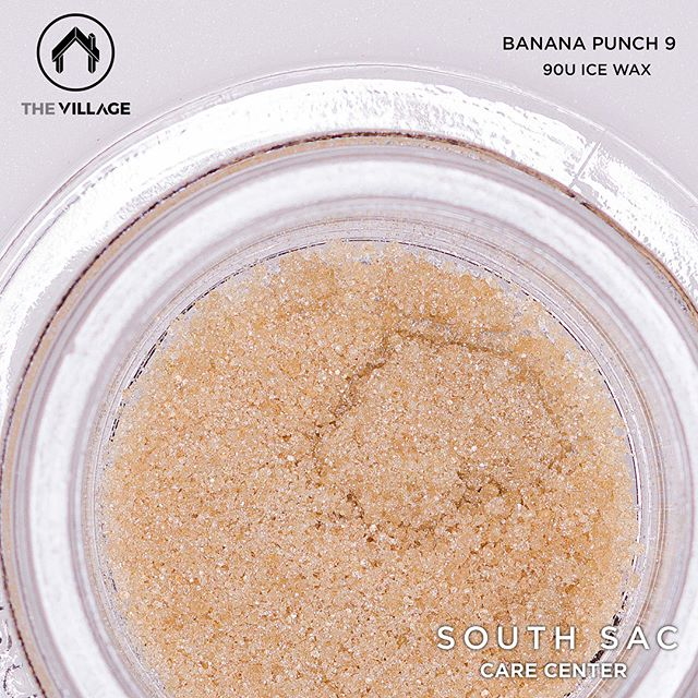 90ū Banana Punch 9 ice water hash by @_thevillage x @jungleboysfullmelts x @symbioticgenetics is back in stock! 🔥🔥🔥 78.4% THC! #sscc916