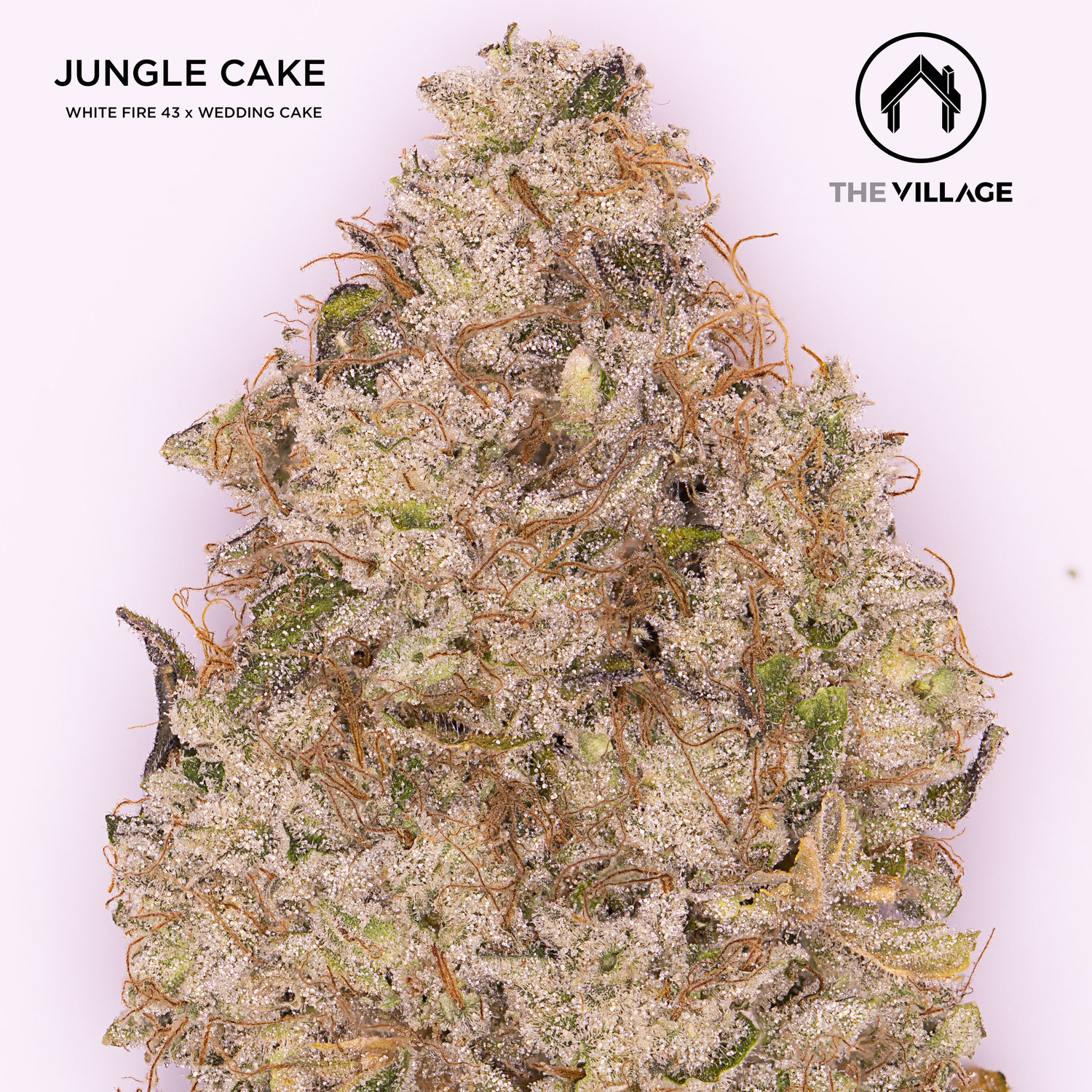 Jungle Cake Is Coming! — The Village