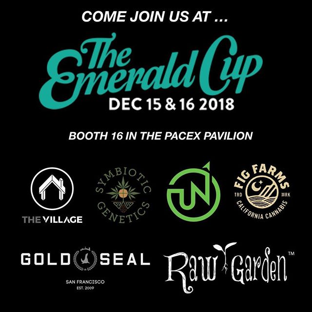 We will be at the @theemeraldcup this year at booth 16 in the Pacex Pavilion with @symbioticgenetics @upnorthhumboldt @goldsealsf @fig.farms @rawgarden Stop by and say what's up! @symbioticgenetics will be releasing two new crosses - Modified Grapes and Cookies & Cream x Purple Punch F2 #_thevillage x #budologist420 #symbioticgenetics #emeraldcup