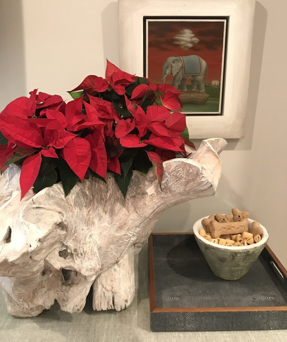 I'm loving the sharp contrast between the poinsettia and my driftwood planter.