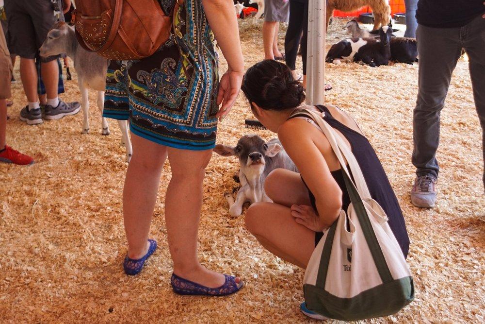 petting-zoo-12.jpg
