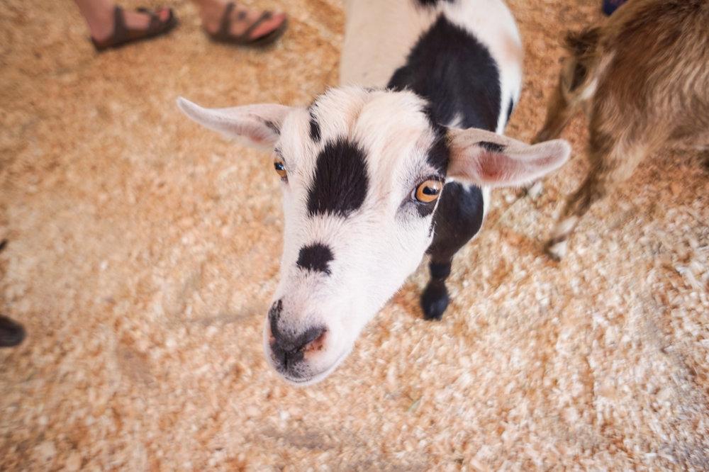 petting-zoo-13.jpg