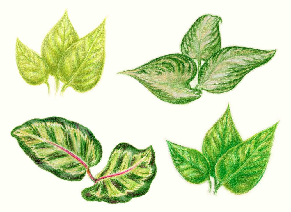 Leaves, 1