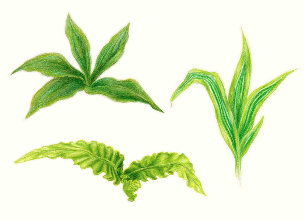 Plants, 2