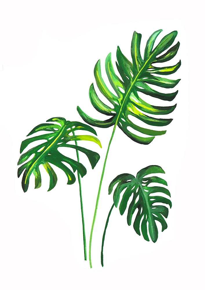 Monstera Deliciosa 1 print website size.jpg