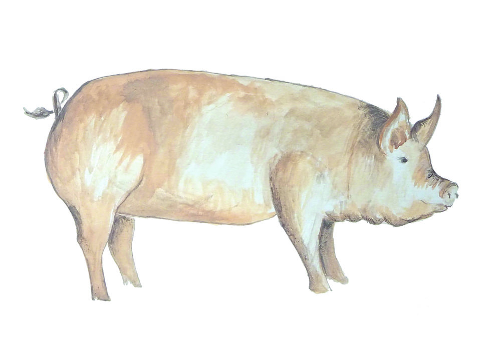 Large painted pig 1000.jpeg