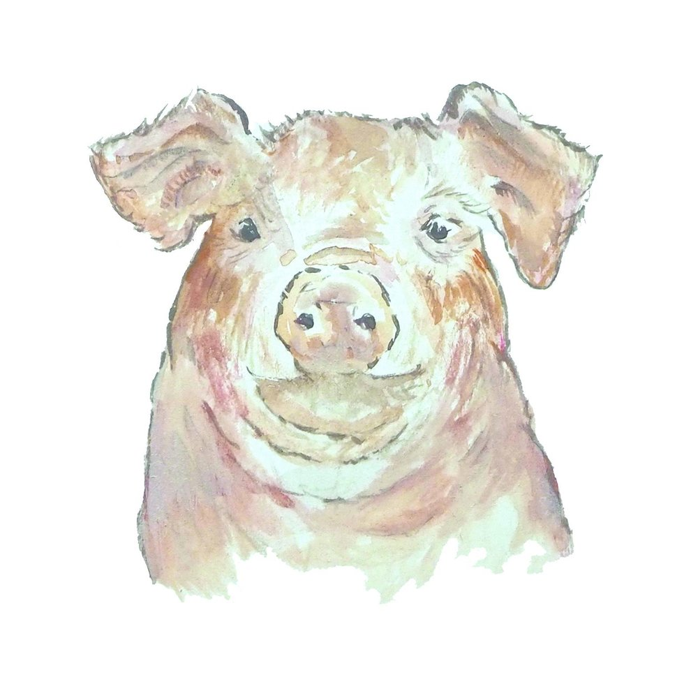 Pig portrait 1000.jpeg