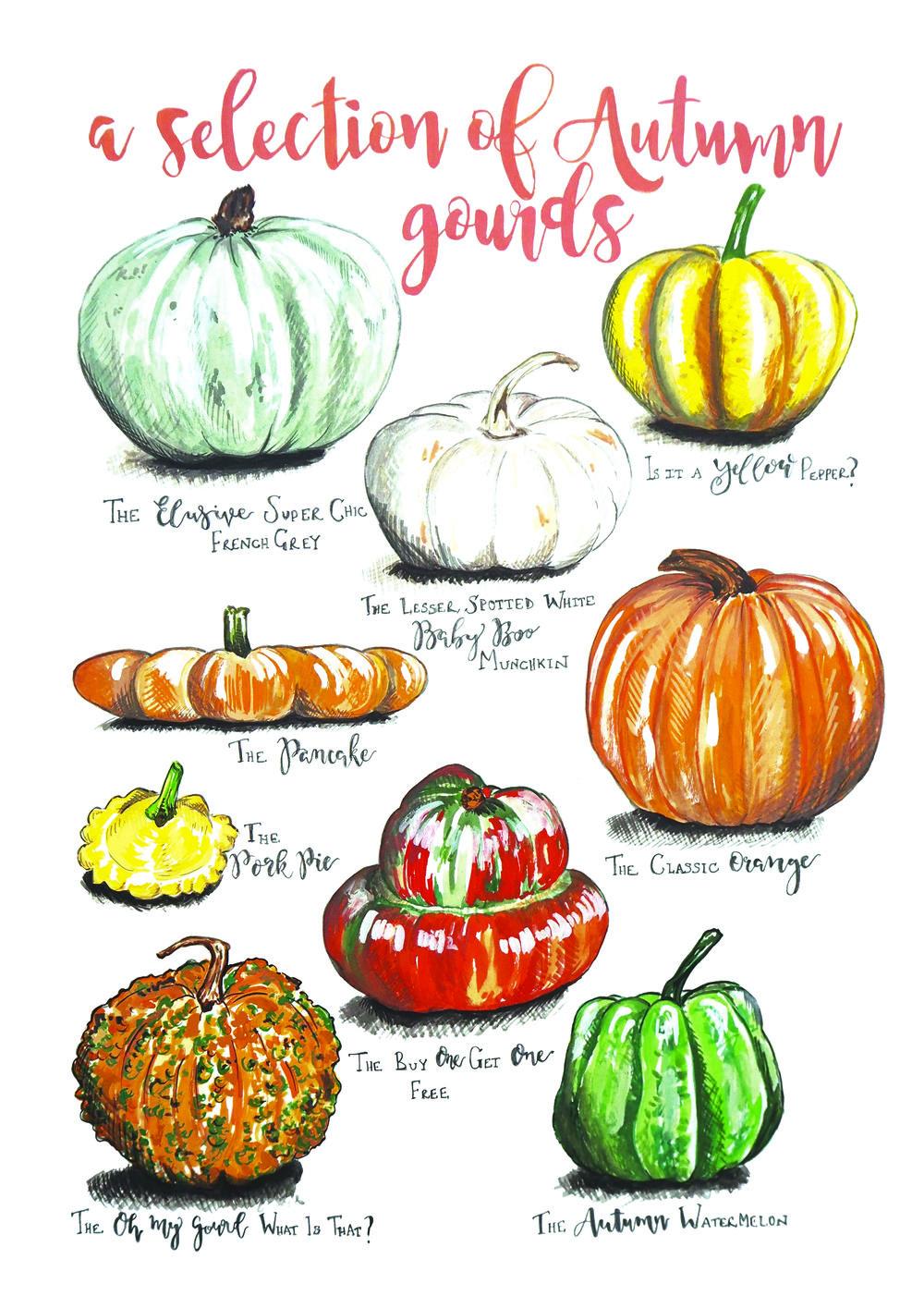 Autumn Gourds A4 1000.jpeg