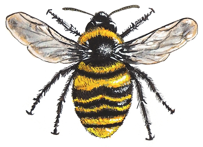 A5 large bee for website.jpg