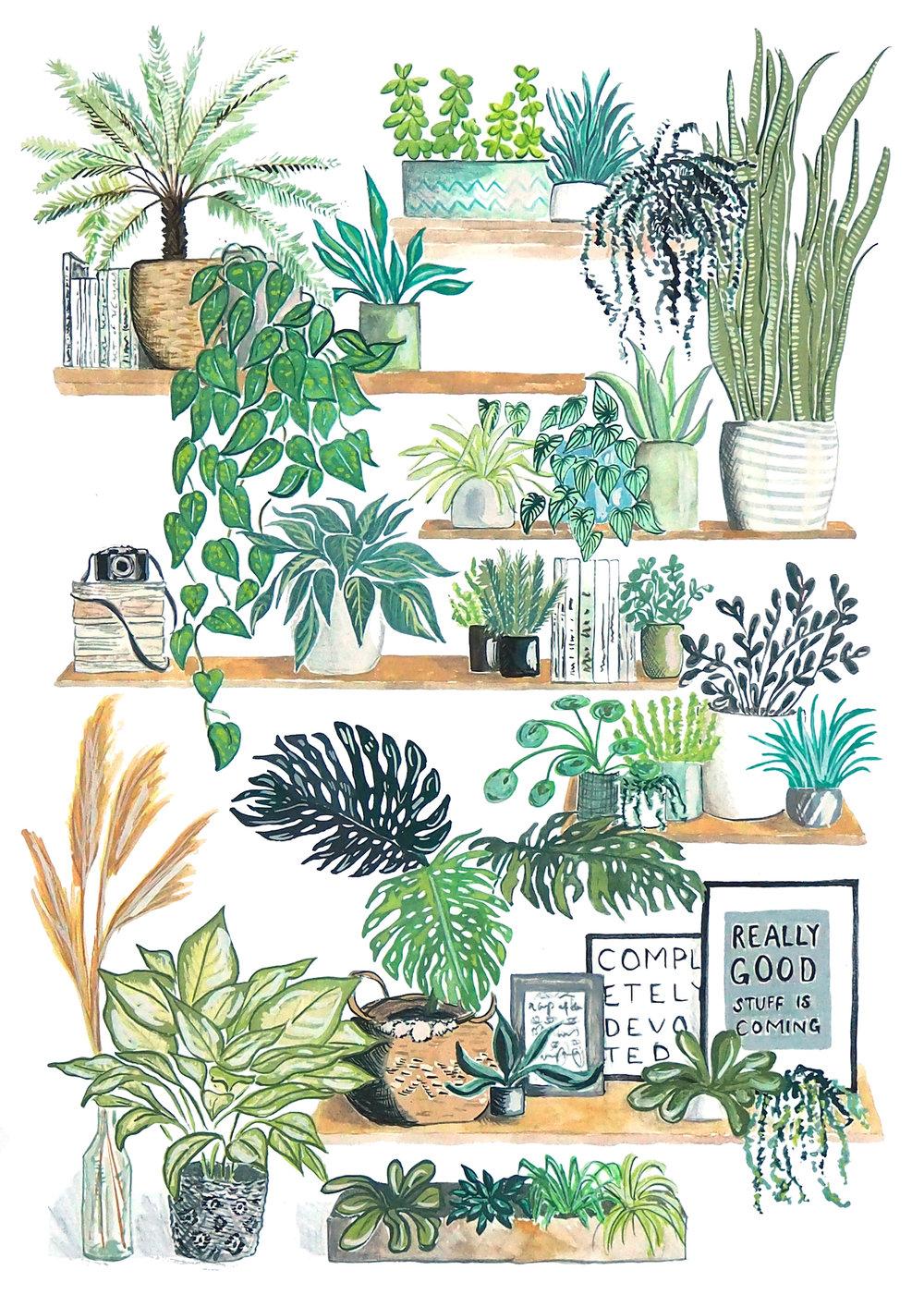 Houseplant shelves 2000.jpg