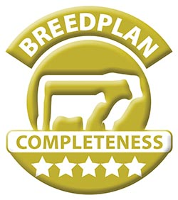 Breedplan-5Star-Gold.jpg