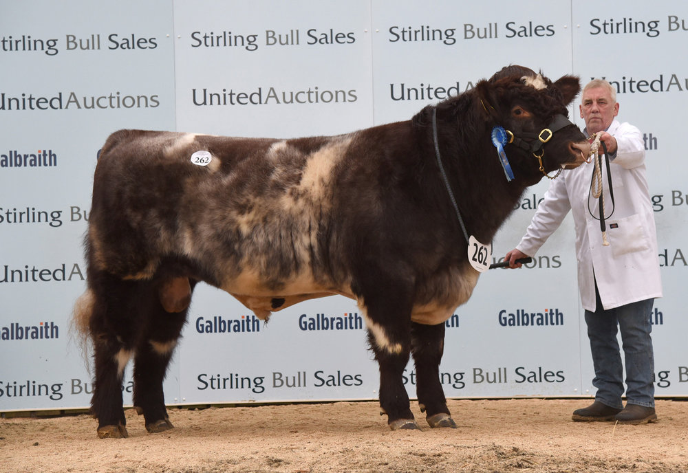 Stirling Bull Sales - February