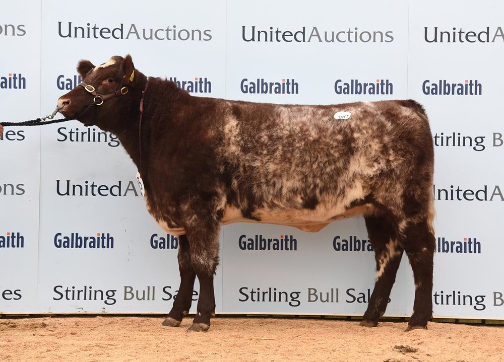 Stirling Bull Sales - October