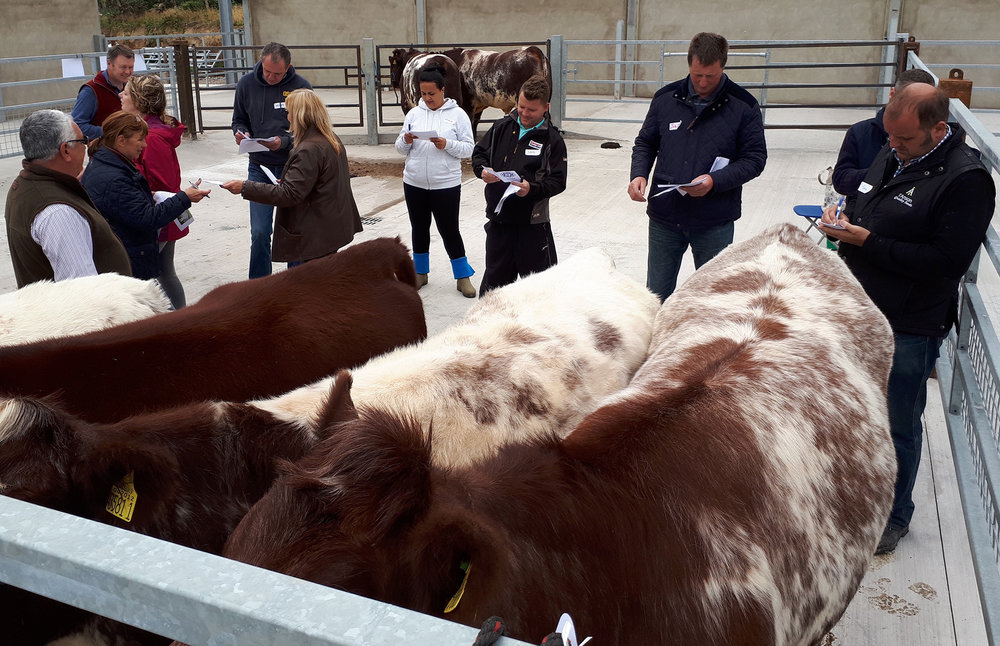 Getting to grips with judging
