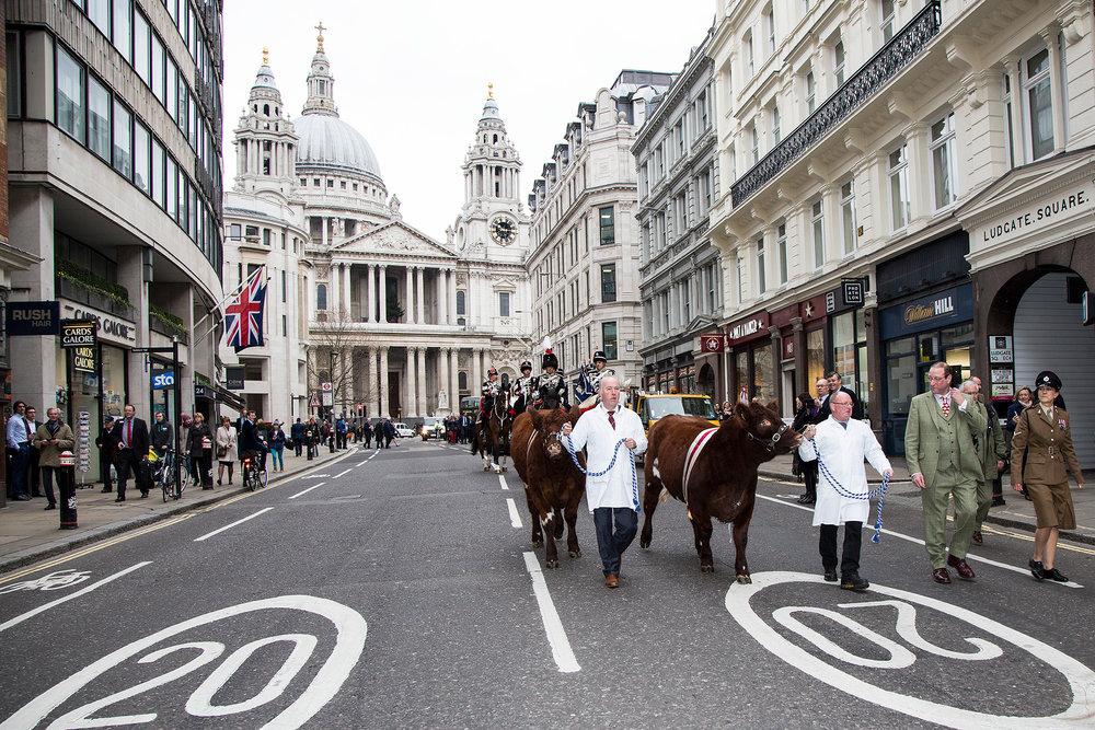 Flashback to 2015, Beef Shorthorn leads the Celebration of British Livestock